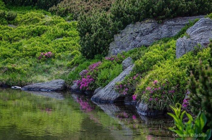 Lacul Lala Fauna si Flora